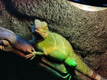 Razstava: Čudovite živali na Bledu