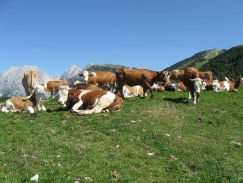 Zaključek projekta Odprta vrata kmetij