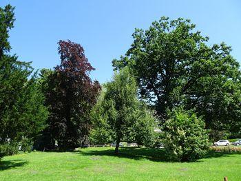 Mogočna drevesa v blejskih parkih
