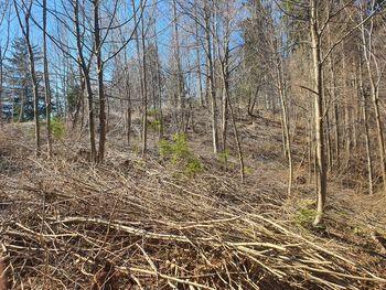 Gozdovi okoli Bleda in primer ureditve gozda v lasti občine