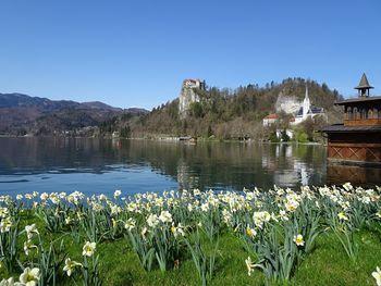 Kartica gosta Julijske Alpe: Bled