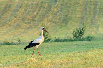 Na koledarju za leto 2016 bomo občudovali ptice