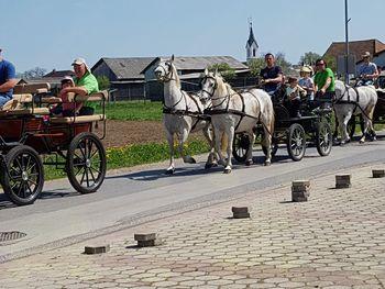 21. blagoslov konjev v Župečji vasi