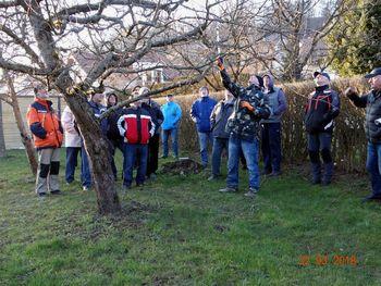 Obrezovanje sadnega drevja