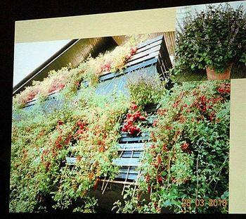 Vrtnarjenje na balkonu