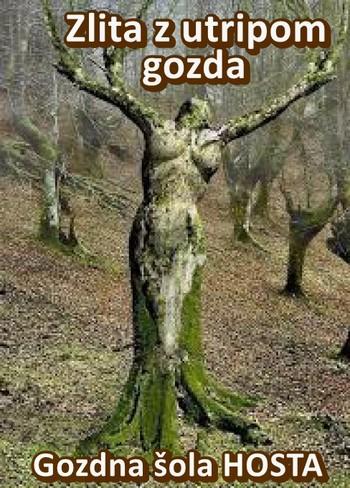 V gozd po mir, navdih in zdravje
