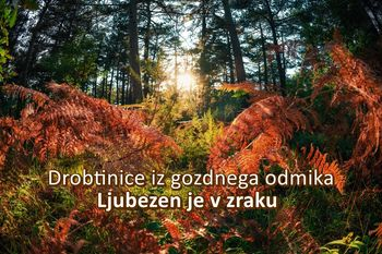 Moč gozda - Ljubezen je v zraku