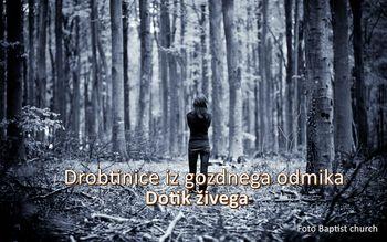 Drobtinice iz gozdnega odmika - Dotik živega