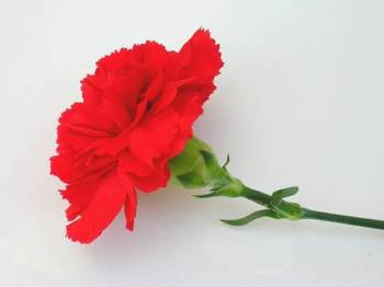Čestitke ob 8. marcu - mednarodnem dnevu žena