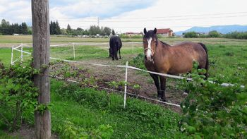 Na Kmetiji Župnek je najboljše z domačega vrta!