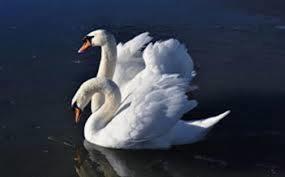 Odločba o ukrepih imetnikom perutnine in ptic v ujetništvu