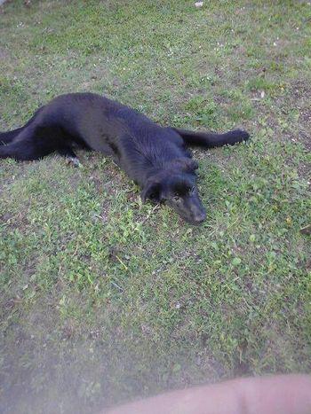 Nujno obvestilo - izgubljena psička na območju Dobja