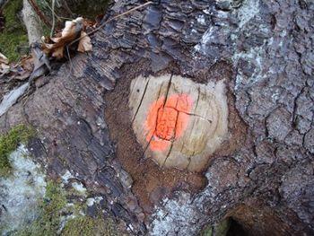 Prijava za odkazilo dreves