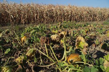 Zbiranje vlog za ocenitev škode, ki jo je povzročila suša in je nastala na kmetijskih pridelkih