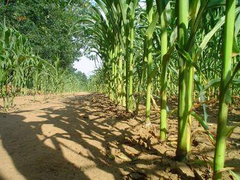 Kmetijstvo - vabilo na predstavitev dveh razpisov