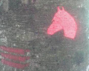 Do konjeniške koče po označeni poti