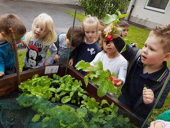 Skupini Pikapolonice in Navihančki vrtnarimo