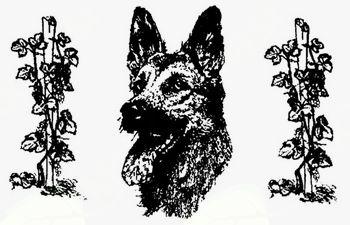 21. Občinski praznik: Tekmovanje športnih psov za pokal VOMAR