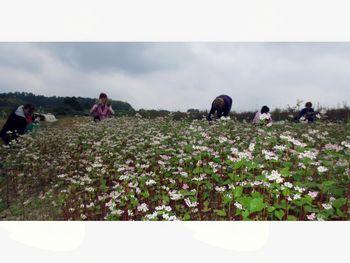 Delavnice na Eko-socialni kmetiji Korenika v Šalovcih v mesecu aprilu
