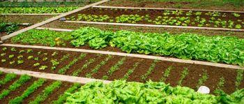"""Delavnica """"Načrtovanje in priprava zelenjavnega vrta"""""""