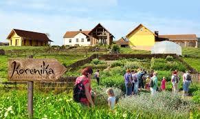 Eko-socialna kmetijaKORENIKA v mesecu juliju