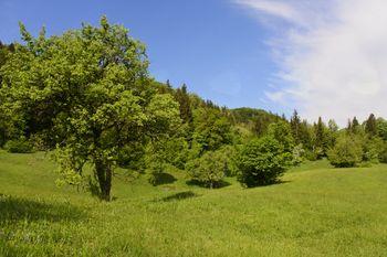 IZLET NA KUM (1220 m)