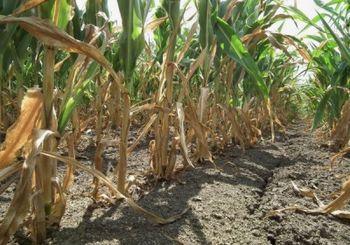 OBVESTILO - Zbiranje vlog za ocenitev škode po suši v letu 2017
