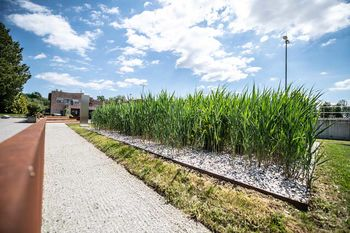 V CČN Domžale – Kamnik na ogled vzorčna rastlinska čistilna naprava