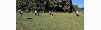 Anketa o sprehajališču in vadbišču za pse v Borovnici