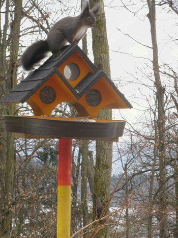 Ne pozabimo na ptice in druge prezeble živali!