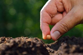 """Menjava semen, sadik in drugih """"viškov"""" iz vrta in iz hiše - zimska zelemenjava"""