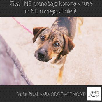 Navodila za skrbnike psov v času koronavirusa