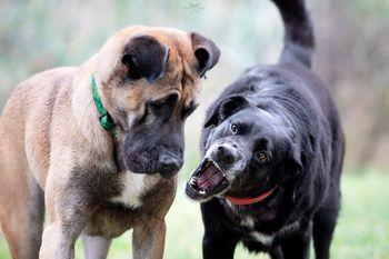 Popestritev pasjega življenja