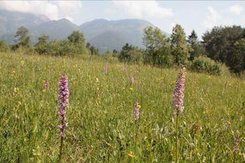 Travniki Blata – naravno bogastvo v bližini Preddvora