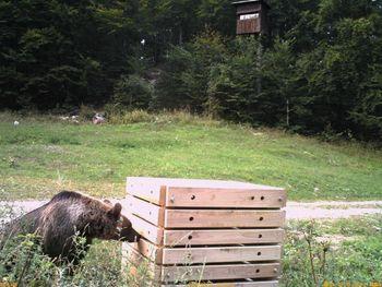 Medovarni smetnjaki in kompostniki na Rakitni – pomemben ukrep za zmanjševanje težav z medvedi