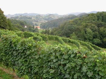 Ekološke sobote v Gorci