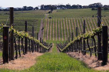 Vinogradništvo in turizem na obmejnem območju med Slovenijo in Madžarsko
