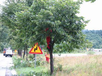 Odstranjevanje suhih vej z lip v Napoleonovem drevoredu v Logatcu