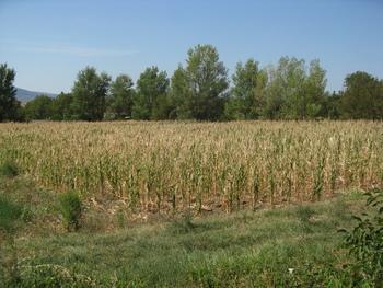 O namakanju s kmeti že pred morebitno letošnjo sušo