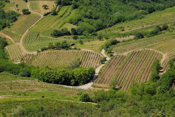 Vipavska dolina s srebrnim znakom