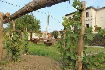 Avtohtone vipavske sorte združene v Šmarjah