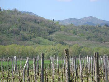 Vipavska dolina, zelena destinacija
