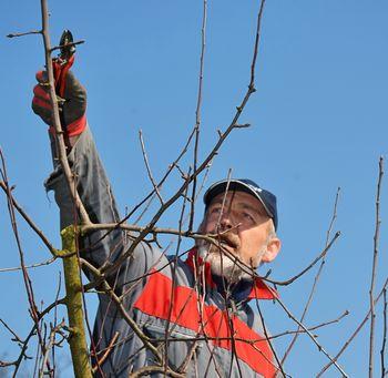 Matjaž Maležič: Vzgoja sadik in nega sadnega drevja