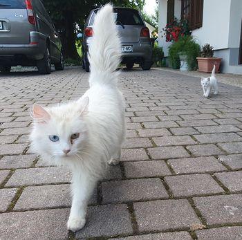 Javni poziv za sterilizacijo in kastracijo mačk
