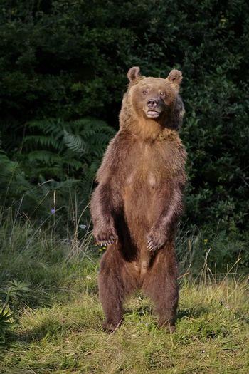 Kako se vesti ob morebitnem srečanju z medvedom ali volkom