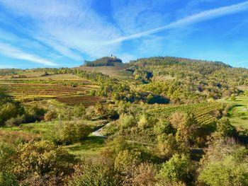 Pinela z Goč je protokolarno vino občine Vipava