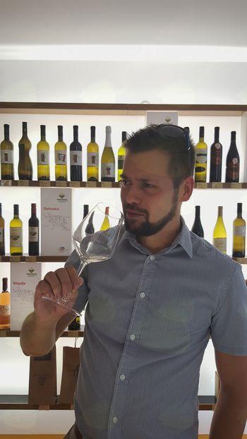 Izbor protokolarnega vina Občine Vipava