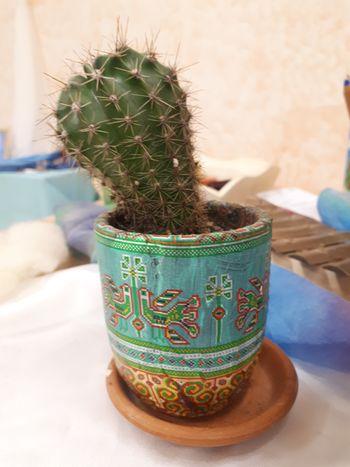 Kaktus z imenom Špička