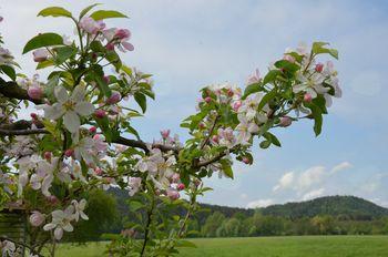 Razkošje pomladi