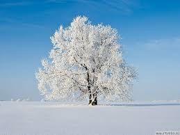 Zdravilna energija dreves